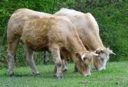 Tierlebensversicherung ohne Höchstaufnahmealter